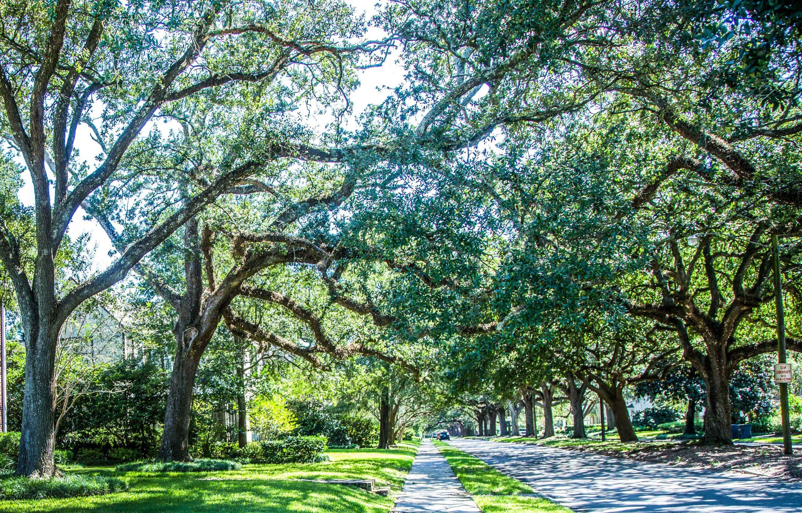 oak-trees-scaled.jpg